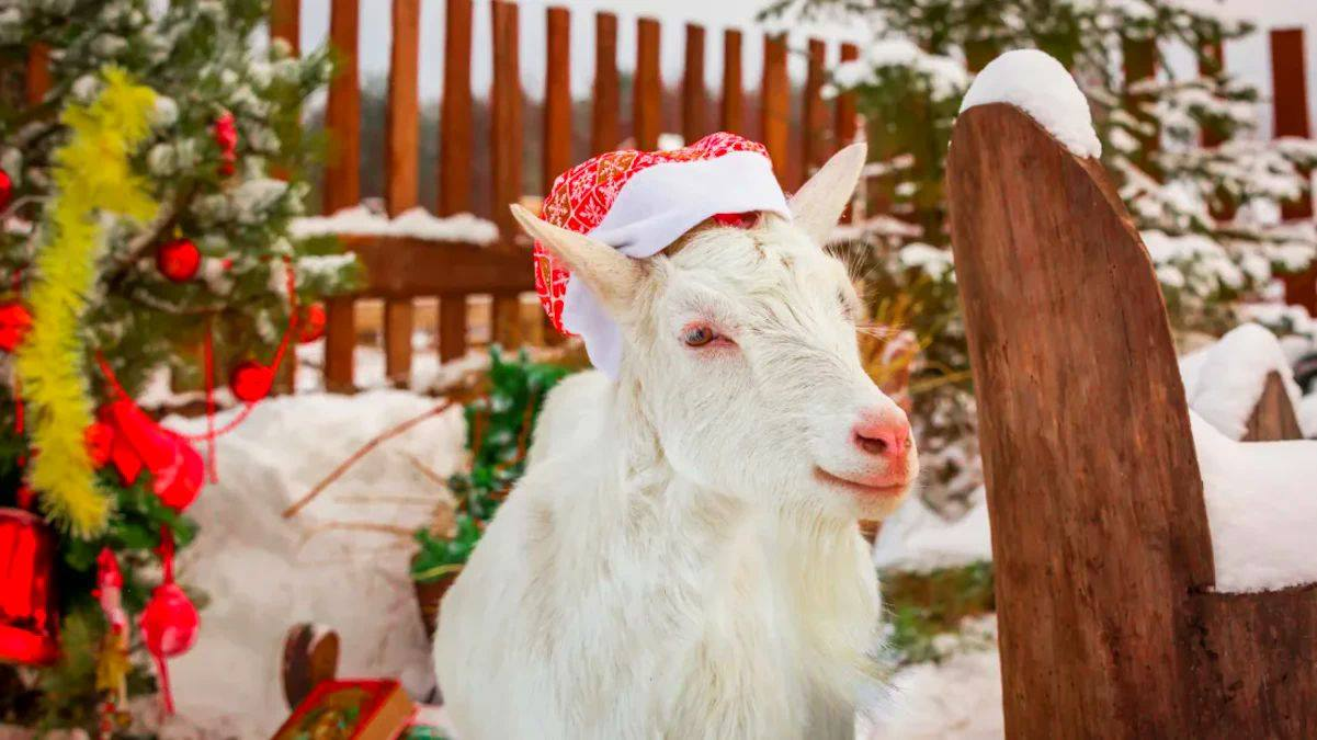 All I want for Christmas is a goat ?